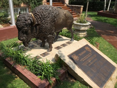 buffalo-with-plaques-2